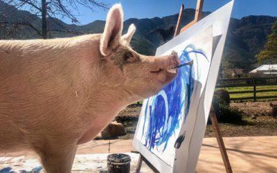 Pigcasso – Tierisch kreativ